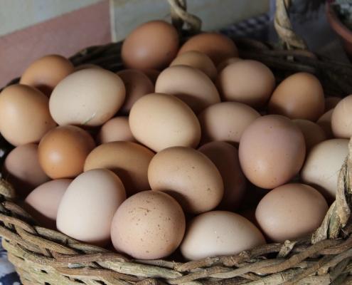eieren en libido